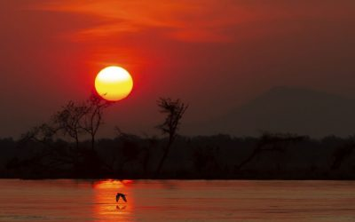 EN AFRICA | Turismo de conservación