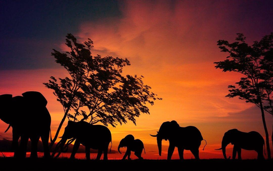 AFRICA SUD ORIENTAL | El impacto del mundo animal